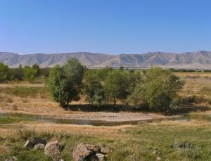 Östlich von Shimkent.