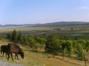 Nahe der Grenze zwischen Kasachstan und Kirgistan nahe Kegen.